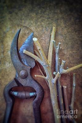 Old Objects Photograph - Pruning Scissors by Carlos Caetano