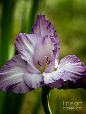 Bisexual Photograph - Purple Glad by Robert Bales