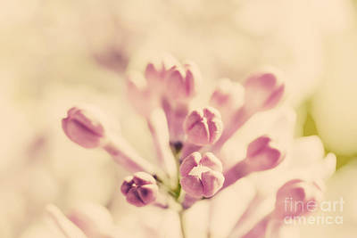 Mother Photograph - Purple Spring Lilac Flowers Blooming Close-up by Michal Bednarek