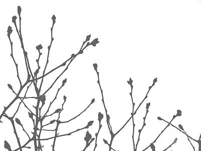 Photograph - Pussy Willow by Andrea Kollo