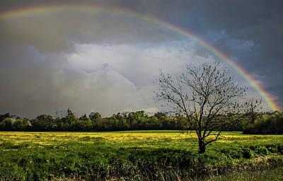 Rainbow Fields Print by Martin Newman