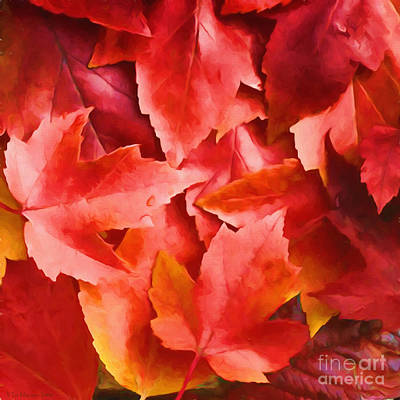 Nature Abstracts Painting - Red Leaves by Veikko Suikkanen