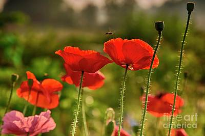 Meadow Painting - Red Poppies by Veikko Suikkanen