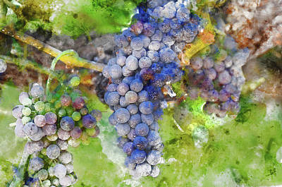 Red Wine Grapes On Vine Print by Brandon Bourdages