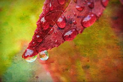 Drippy Photograph - Refreshment by Bonnie Bruno