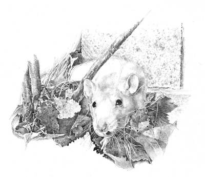 Reggie The Rat Print by Judith Angell Meyer