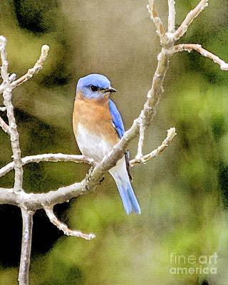 Bluebird Digital Art - Rhapsody In Blue by Betty LaRue