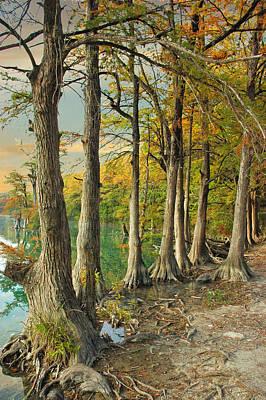 River Road Cypress Print by Robert Anschutz