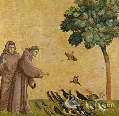 Saint Francis Of Assisi Preaching To The Birds Print by Giotto di Bondone