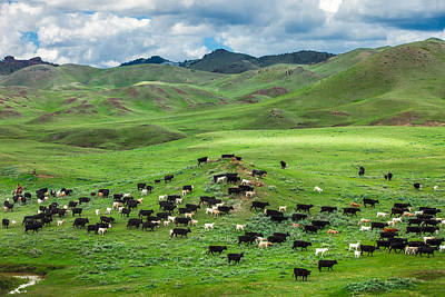 Cow Photograph - Salt And Pepper Pasture by Todd Klassy