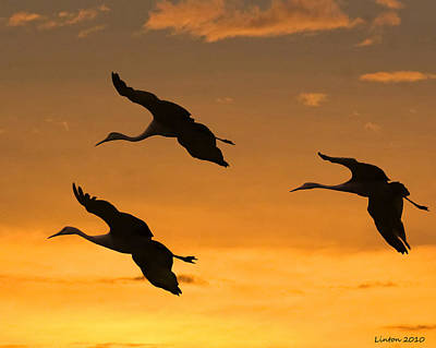 Sandhill Crane Photograph - Sandhill Cranes At Dusk by Larry Linton
