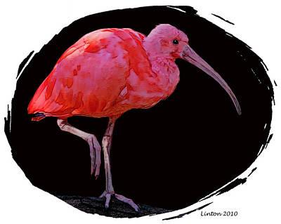 Ibis Digital Art - Scarlet Ibis by Larry Linton