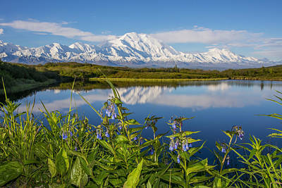 Scenic View Of Mt. Mckinley Reflecting Print by Cathy Hart