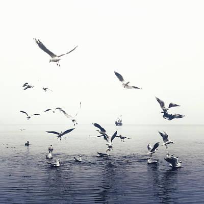 Flying Seagull Photograph - Seagulls by Joana Kruse