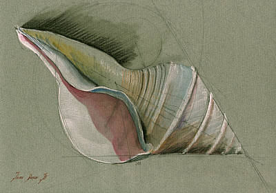 Seashell Art Painting Print by Juan  Bosco