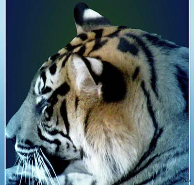 The View Mixed Media - Shades Of A Tiger  Series by Debra     Vatalaro