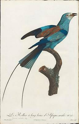 Bird Painting - Sharpes Birds Of Paradise by MotionAge Designs