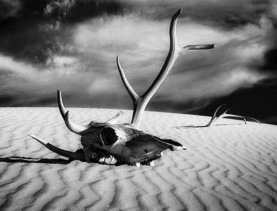 Composite Painting - Skull And Antlers by Sandra Selle Rodriguez