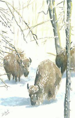 Snow Buffs Print by Dan Bozich