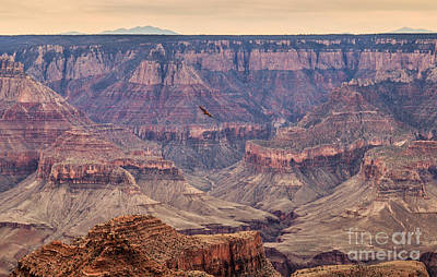 Southwest Gate Photograph - Soaring by Robert Bales