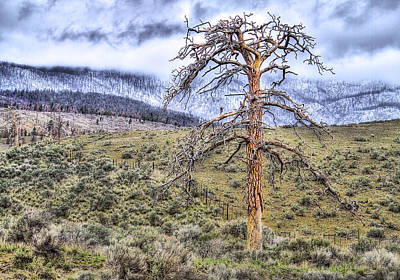Mountain Scape Photograph - Solitude by Naman Imagery