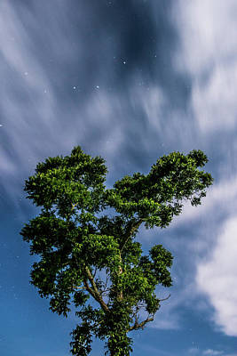 Van Goh Photograph - Sparkling Stars by Shelby Young