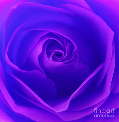 Purple Rose Photograph - Spellbound by Krissy Katsimbras