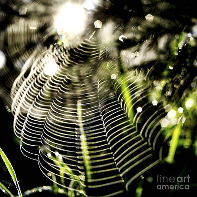 Arachnid Photograph - Spider's Web. by Bernard Jaubert