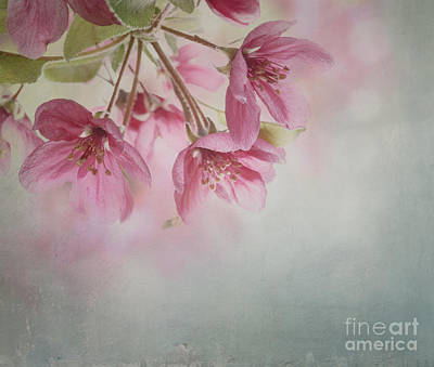 Spring Blossom Print by Jelena Jovanovic