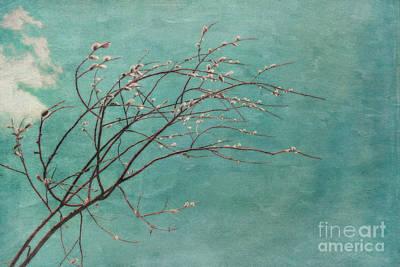 Spring Blues Print by Priska Wettstein