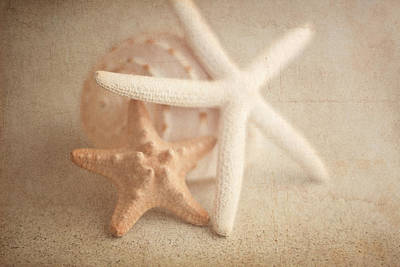 Conch Photograph - Starfish Still Life by Tom Mc Nemar