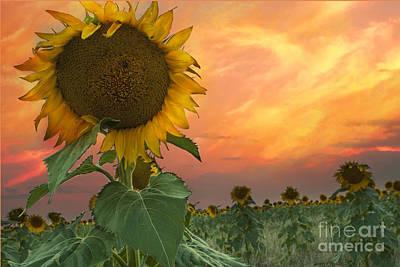 Sunflower Field  Print by Juli Scalzi