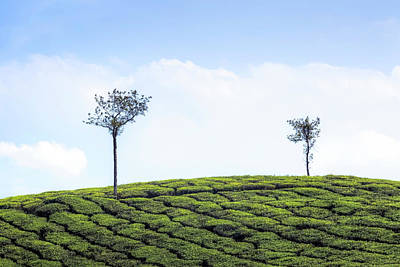 Tea Planation In Kerala - India Print by Joana Kruse