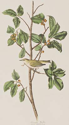 Tennessee Warbler Print by John James Audubon