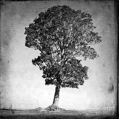 Alone Digital Art - Textured Tree by Bernard Jaubert