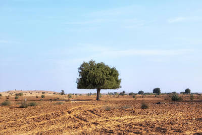 Baum Photograph - Thar Desert - India by Joana Kruse