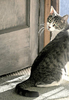 Gray Tabby Photograph - The Back Door by Diana Angstadt
