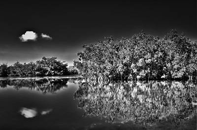 Lee Winter Photograph - The Mangrove Coast by Rich Leighton
