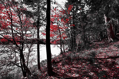 Of Autumn Photograph - The Reds Of Autumn by David Patterson