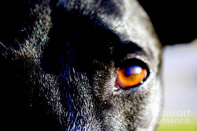 Rescued Greyhound Photograph - The Saint by Jennifer  Diaz