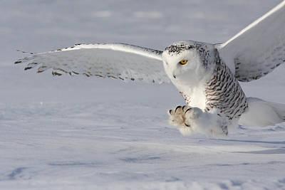 Hunting Bird Photograph - The White Hunter by Mircea Costina