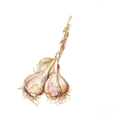 Garlic Painting - Three Garlics by Fran Henig