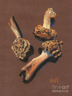 Morel Drawing - Three Morels by Donald Maier