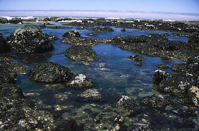Tidepools - The Lost Coast Print by Soli Deo Gloria Wilderness And Wildlife Photography