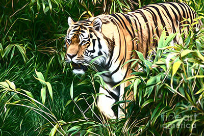 Cat Photograph - Tiger by Andrew Michael