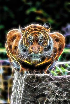 Tigers Print featuring the mixed media Tiger Collection by Marvin Blaine