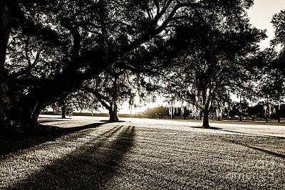 Photograph - Tranquility Amongst The Oaks by Scott Pellegrin