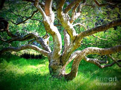 Tree In Golden Gate Park Print by Carol Groenen