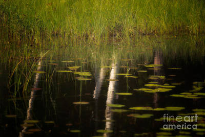 Adjectives Photograph - Tree Reflections by Patti Larson