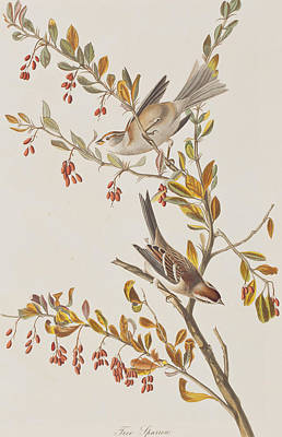 Sparrow Painting - Tree Sparrow by John James Audubon